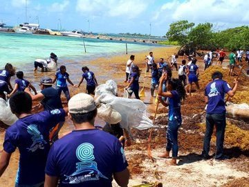 Jornada de recolección de sargazo en Cancún