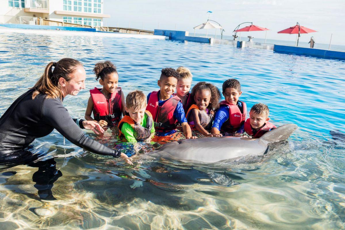 Marineland Florida se suma a la cartera de Grupo Dolphin