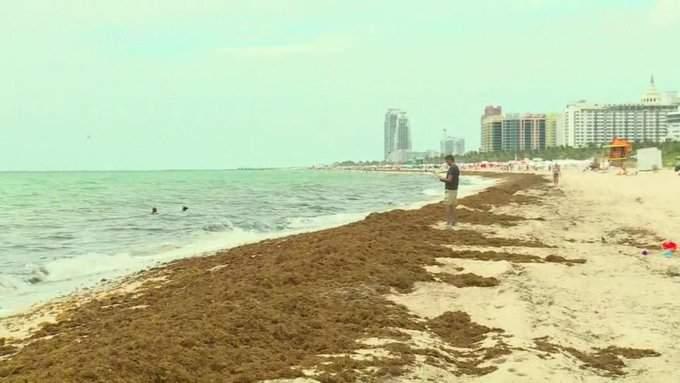 La limpieza de las playas comenzó este fin de semana. Foto: CNN Español
