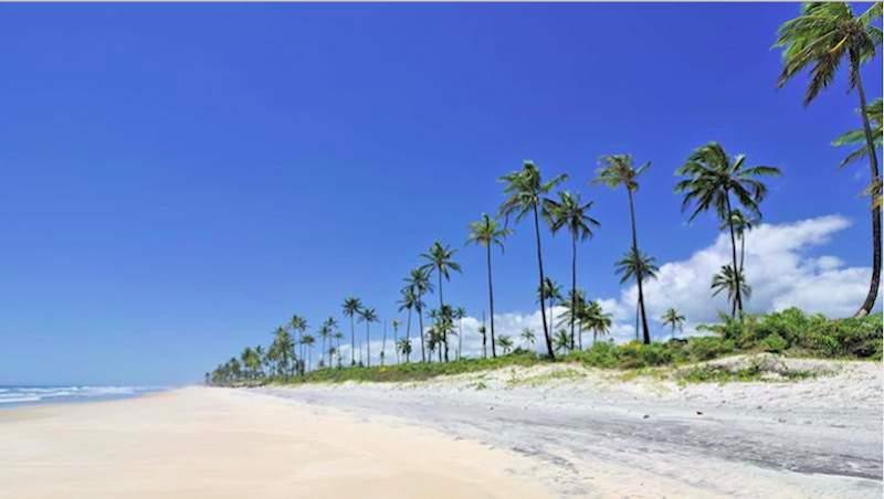 Sitio proyectado para el hotel de Vila Galé en la costa de Bahia. Foto: C