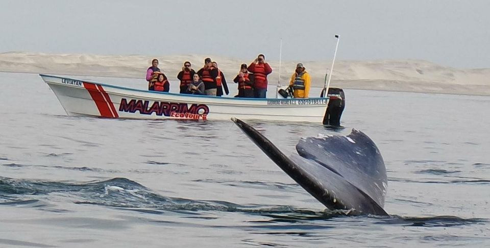 Avistamiento de ballenas en Baja California. Foto: Malarrimo Ecotours.