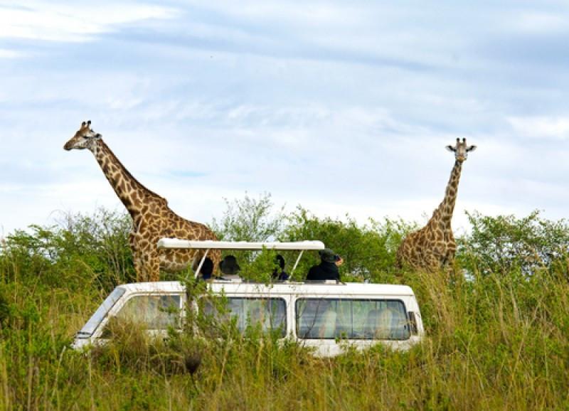 Safari en Kenia. #shu#